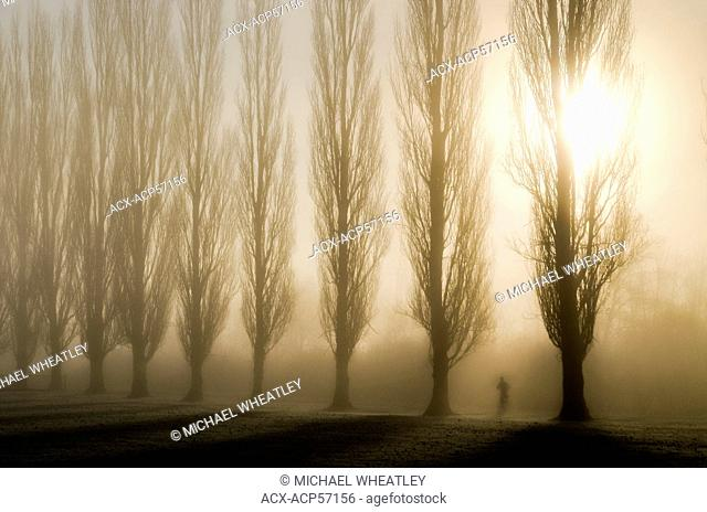 Jogger and sunrise through fog and trees, Burnaby Lake Regional Park, Burnaby, British Columbia, Canada