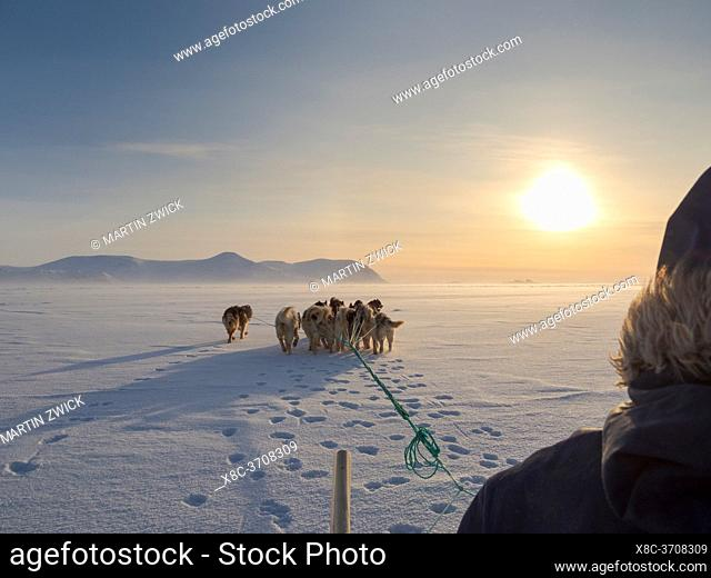 Inuit hunter on dog sled on the sea ice of the Melville Bay near Kullorsuaq in North Greenland. North America, danish teritorry