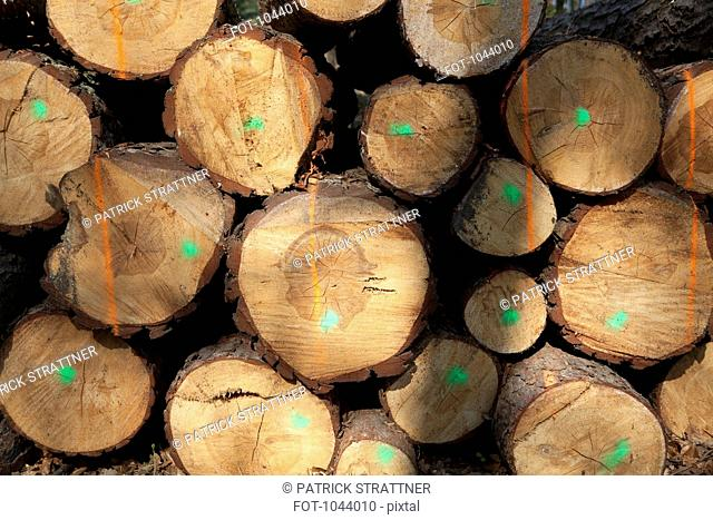 A stack of cut timber