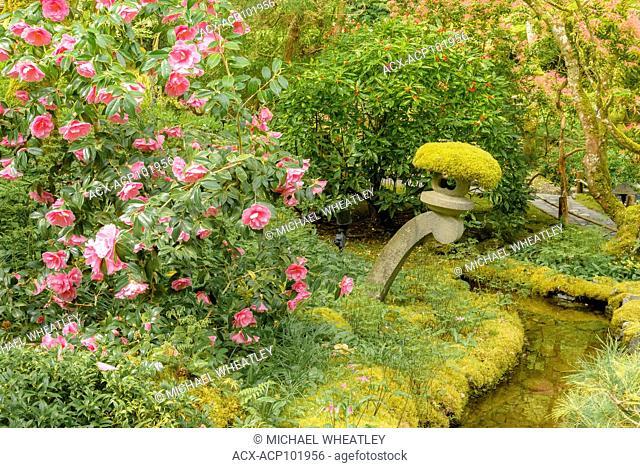 Stone lantern and camelia bush, Japanese Garden, Butchart Gardens, Brentwood Bay, near Victoria, British Columbia, Canada