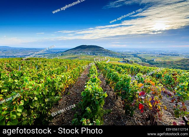 View of the Mont Brouilly hill and vineyards of the Beaujolais, France