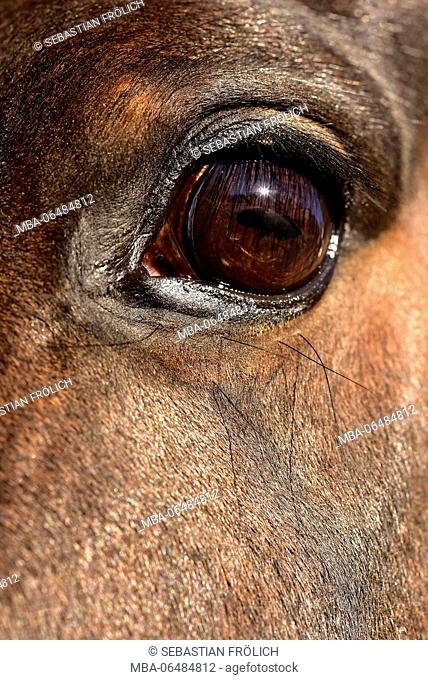 Horse's eye with mirror image of the sun