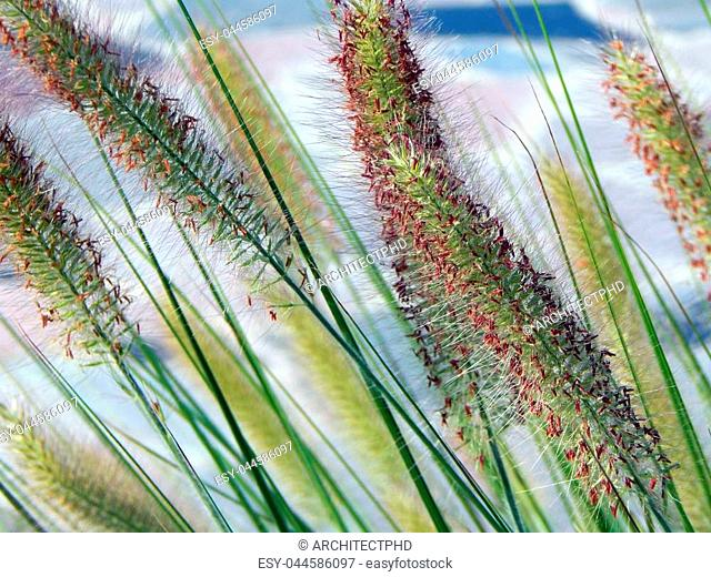 Reeds growing on the lake close-up texture