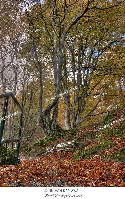 Bench and handrail in Dunnyduff Wood, near Falls of Tarnash, Keith, surrounded by bright autumn colours
