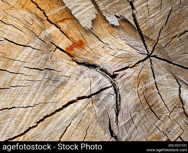 Cracks on a chopped Holm Oak trunk. Santa Eulàlia village countryside. Lluçanès region, Barcelona province, Catalonia, Spain
