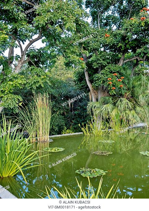 Spathodea campanulata, Sagittaria, Papyrus, Nympheae, Jardin de Aclimatacion de la Orotava, Puerto de la Cruz, Tenerife, Canary Islands, Spain