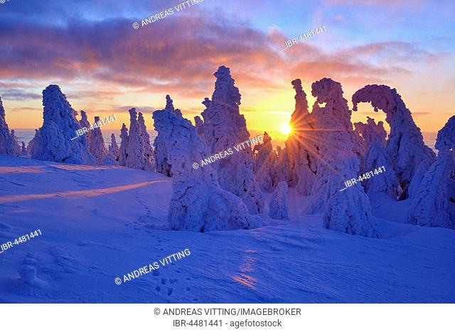 Sunrise on the Brocken, winter, snow-covered pines, snow bent, Harz National Park, Saxony-Anhalt, Germany