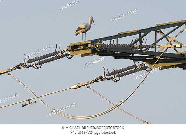 Dummy of white stork on electricity pylon, Ciconia ciconia, Hesse, Germany, Europe