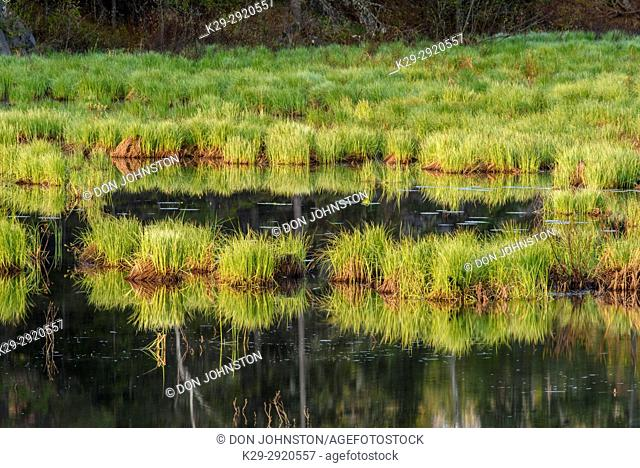 Fairbank Creek on a spring morning, Greater Sudbury, Ontario, Canada