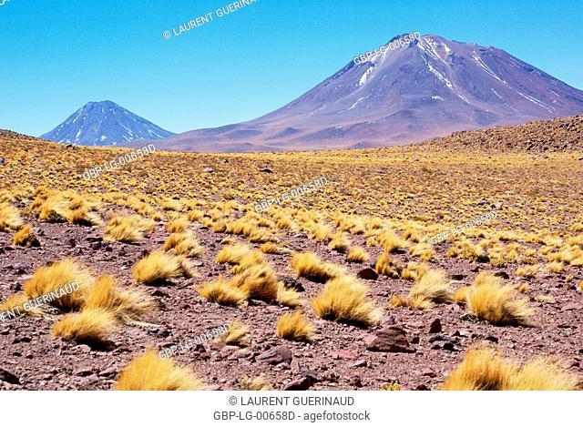 Sector Lagunas Miscanti y Miñiques, Los Flamencos Reserve National, Atacama Desert, Region de Antofagasta, Santiago, Chile