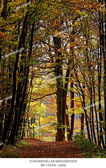 Forest track near Weyarn district of Miesbach Upper Bavaria Germany