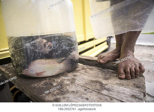 Fish caught in a plastic bag, Lake Maninjau, Sumatra, Indonesia