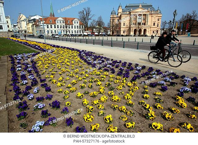 Pansy are in bloom in front of Schwerin Palace in Schwerin, Germany, 10 April 2015. Spring has arrived in Germany with temperatures reaching up to 24 degrees...
