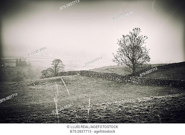 Early morning rural landscape with mists, trees and dry-stone walls. Grassington, Skipton, Yorkshire Dales, North Yorkshire, England, UK