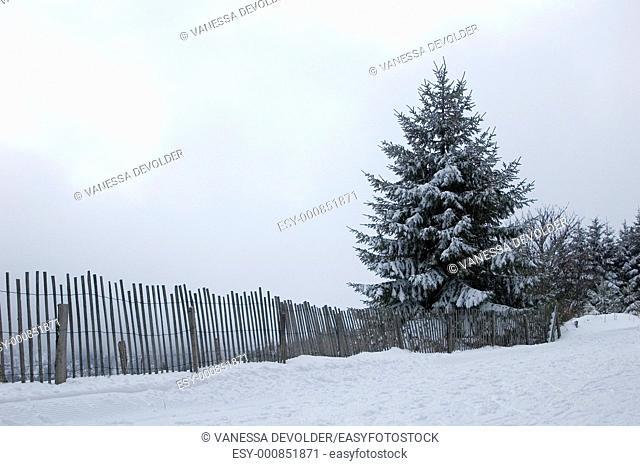 Snow covered landscape  Location: France, Vosges