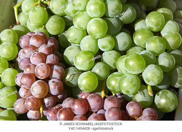 Niagara and Delaware grapes of the Finger Lakes region of New York State in September 2006