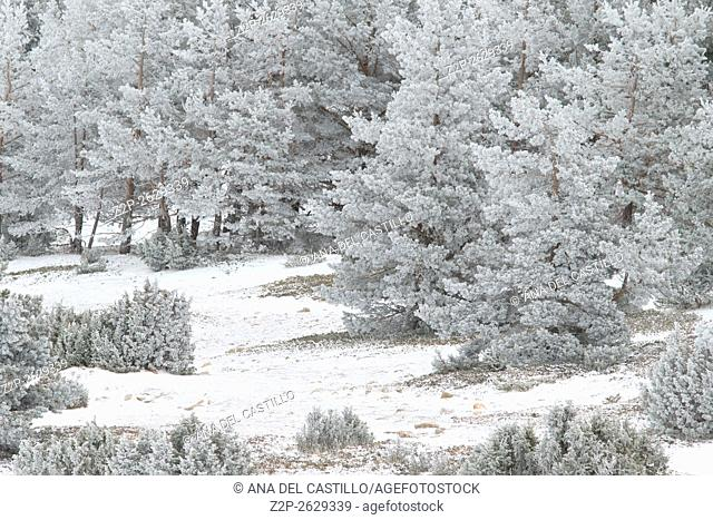 winter landscape Gudar mountains Teruel Spain