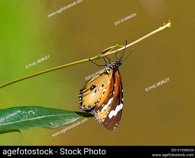 butterfly hanging around