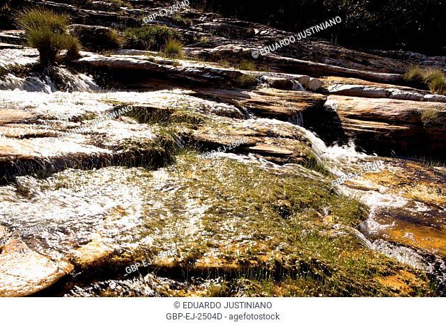Herbaceous vegetation beside a River of Rocky Bed, São Gonçalo do Rio Preto, Minas Gerais, Brazil