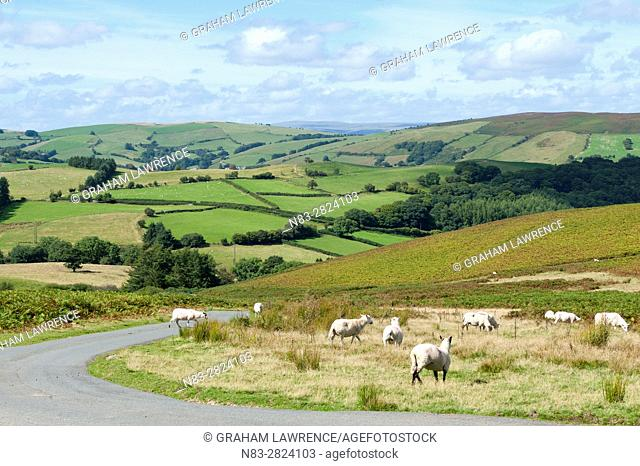 A view over the Mynydd Epynt range in Powys, Wales, UK