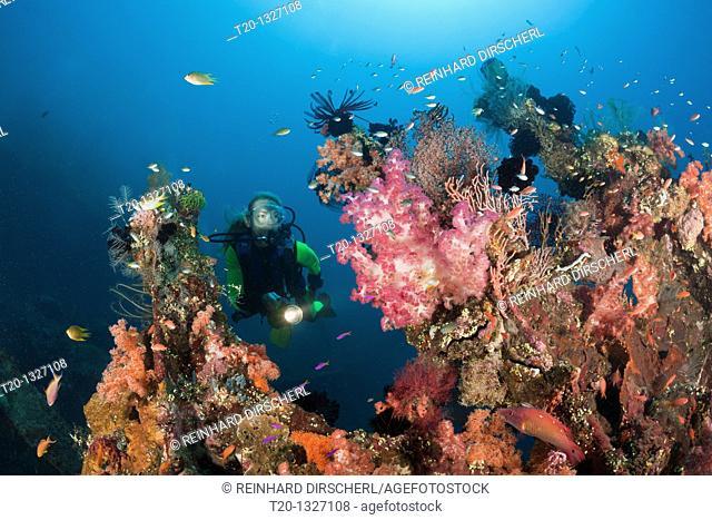 Scuba Diver at Liberty Wreck, Tulamben, Bali, Indonesia
