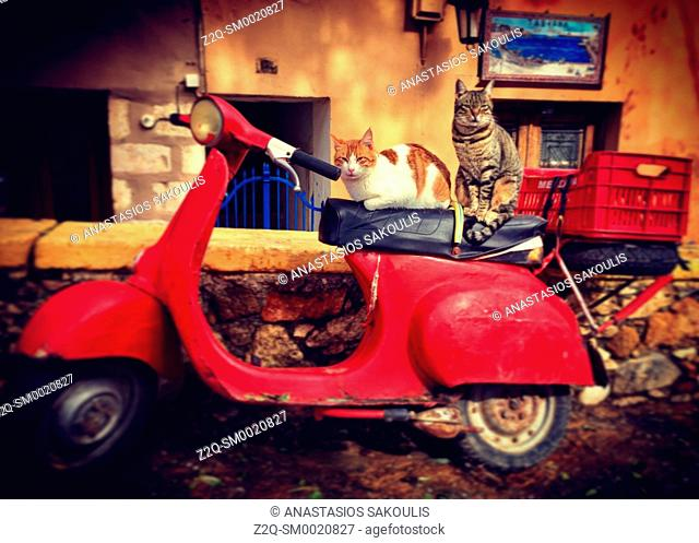 A cat on an old scooter, Chania, Crete, Greece