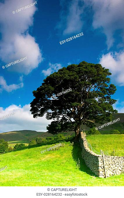 Typical landscape in Yorkshire Dales National Park, Sedbergh,Cumbria, England