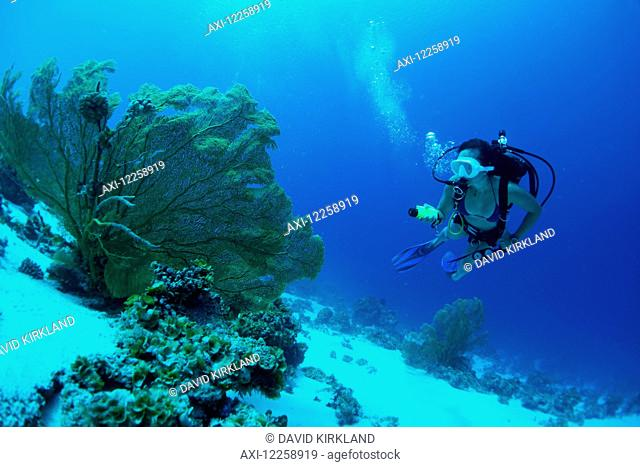 Scuba diving off a remote island; Marshall Islands