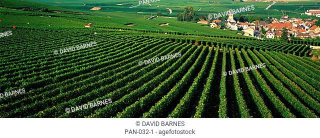 Vineyards, Oger, Champagne, France