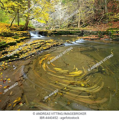 Colorful autumn foliage on limestone terraces in the Schlichem River, leaves tossed about in the whirlpool, Schlichemklamm, Epfendorf, Baden-Württemberg