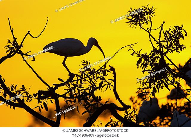 Bird silhouetted aganist orange sky at sunset at the Audubon Society Bird Rookery in Venice Florida
