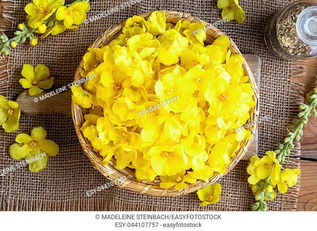 Fresh denseflower mullein flowers in a basket, top view