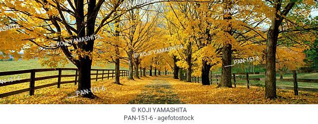 Autumn Trees, near Waynesboro, Virginia, USA