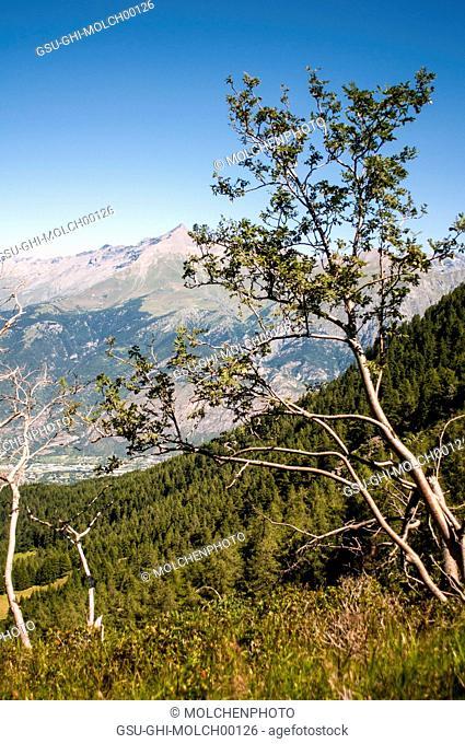 Mountainside Trees