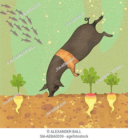 Black pig diving in water