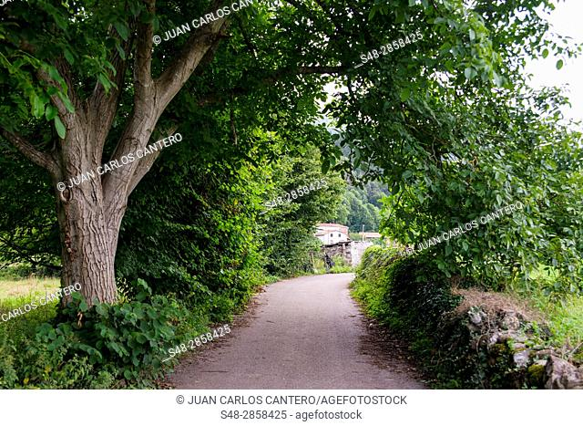 Rural Environment in Cantabria. Spain. Europe