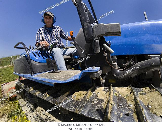 Driver on crawler tractor with noise-free headphones works in the vineyard in the Langhe hills in Piedmont Italy