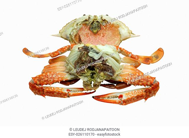 Streamed / boiled Flower crab / Blue crab / Blue swimmer crab / Blue manna crab / Sand crab isolated on white background
