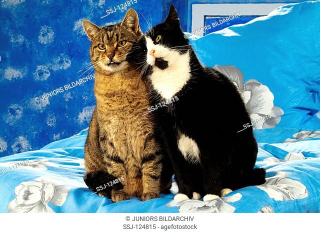 two domestic cats cuddling in bed