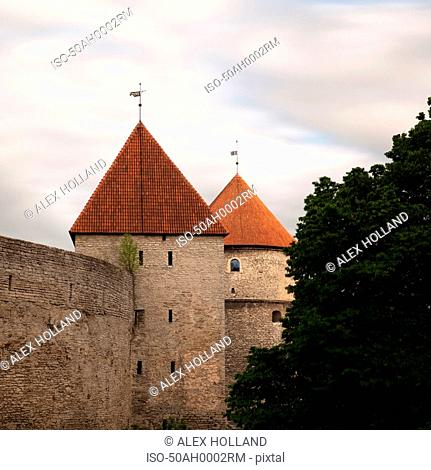 Medieval city wall with tree