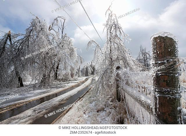 Ice storm devistates Springdale and other areas of northwest Arkansas January 27-28, 2009. Many areas recieved over 1 inch ice accumulations on top of thick...