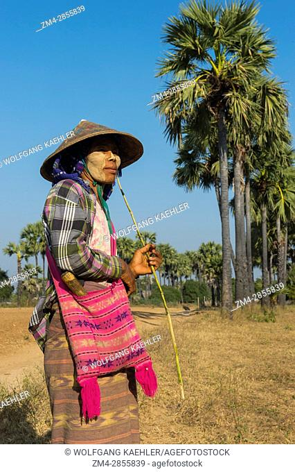 A woman is herding goats in a field along the road from Bagan to Mandalay in Myanmar