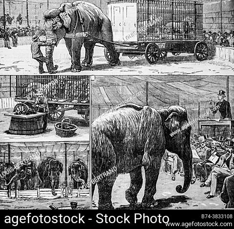 sale at public auction of the menagerie of the circus myers, the illustrated universe 1882, publisher new bookstore