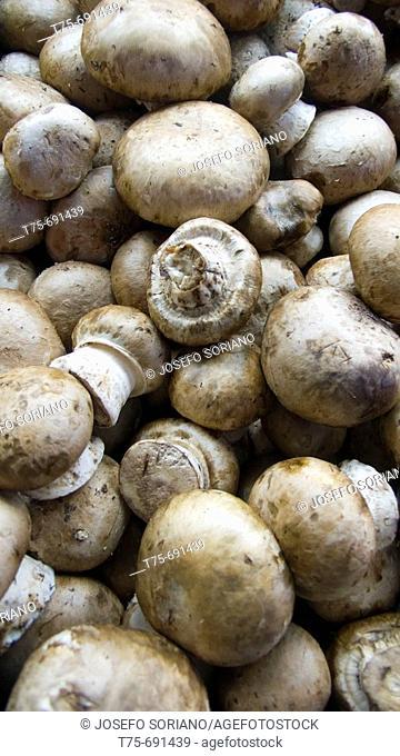 'Portobello' mushrooms