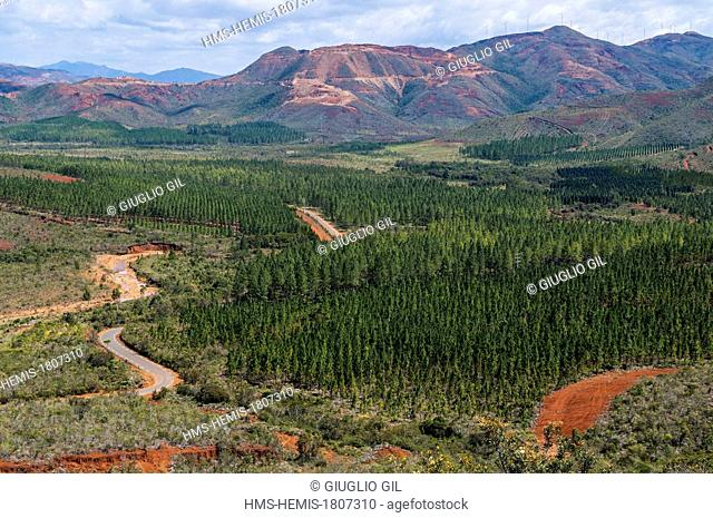 France, New Caledonia, Grande Terre, South province, pines plantation in Pony valley view from Col de Crevecoeur