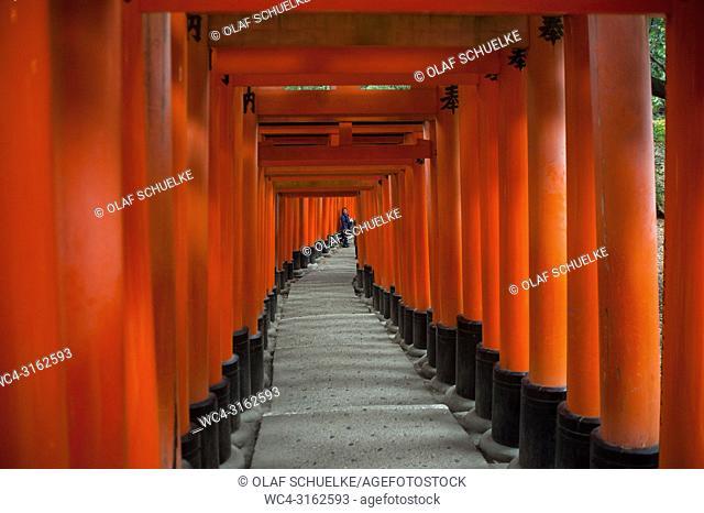 24. 12. 2017, Kyoto, Japan, Asia - An interior view of one of the Torii paths leading to the Fushimi Inari Taisha, a Shinto shrine in Fushimi Ward in Kyoto