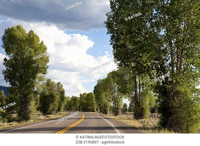 Driving along a tree-lined street on a sunny summer day in Grand Teton National Park, Wyoming, USA