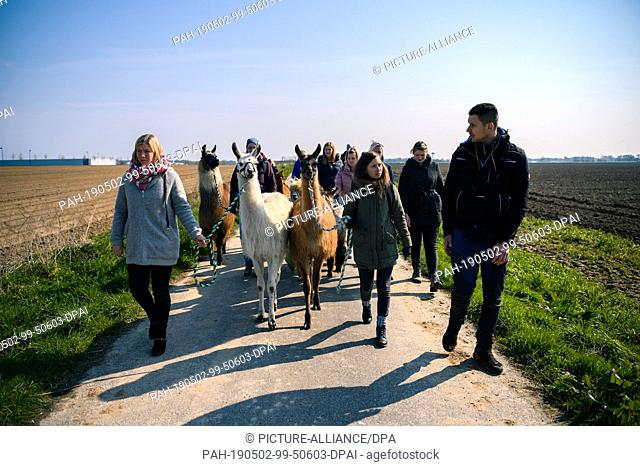 14 April 2019, Lower Saxony, Drantum: A group of people go for a walk with llamas and alpacas. Photo: Mohssen Assanimoghaddam/dpa
