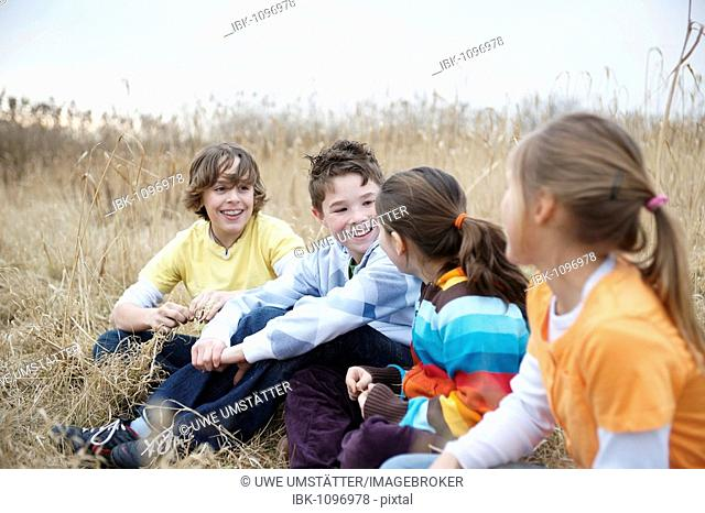 Two boys and two girls sitting on a meadow and talking