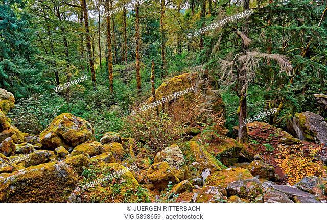 Temperate rainforest, Paradise Valley,Great Bear Rainforest, Squamish, British Columbia, Canada - Squamish, British Columbia, Canada, 24/09/2014